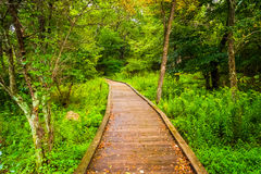 Boardwalk path along the Limberlost Trail in Shenandoah National Royalty Free Stock Photography