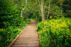Free Boardwalk Path Along The Limberlost Trail In Shenandoah National Stock Images - 78183124