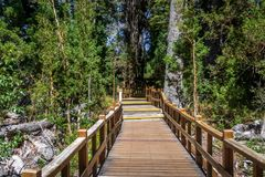 Boardwalk path at Arrayanes National Park - Villa La Angostura, Patagonia, Argentina. Boardwalk path at Arrayanes National Park in Villa La Angostura, Patagonia royalty free stock photography