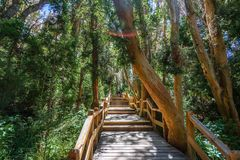 Boardwalk path at Arrayanes National Park - Villa La Angostura, Patagonia, Argentina stock photos