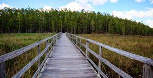 Free Boardwalk Path At Corkscrew Swamp Sanctuary In Naples, Florida Stock Photo - 105556490