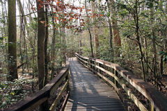 Boardwalk Path  at Congaree National Park Stock Photo
