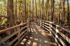 Boardwalk path at Corkscrew Swamp Sanctuary in Naples. Florida through pond cypress trees Taxodium distichum var nutans Stock Photography