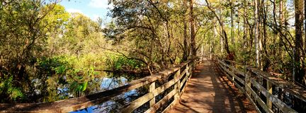 Boardwalk path at Corkscrew Swamp Sanctuary in Naples. Florida through pond cypress trees Taxodium distichum var nutans Royalty Free Stock Photos