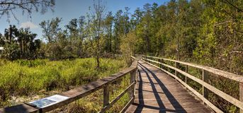 Boardwalk path at Corkscrew Swamp Sanctuary in Naples. Florida through pond cypress trees Taxodium distichum var nutans Stock Photos