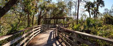 Boardwalk path at Corkscrew Swamp Sanctuary in Naples. Florida through pond cypress trees Taxodium distichum var nutans Royalty Free Stock Images