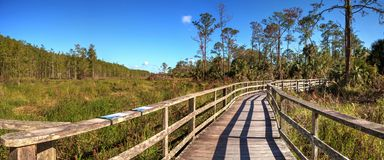 Boardwalk path at Corkscrew Swamp Sanctuary in Naples. Florida through pond cypress trees Taxodium distichum var nutans Royalty Free Stock Photography