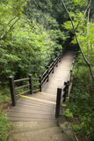 Boardwalk path in forest Royalty Free Stock Photography