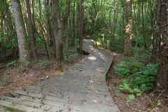 Boardwalk Path thru the Woods Royalty Free Stock Photos