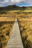 Boardwalk/path traverses wetlands Stock Images