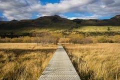 Boardwalk/path traverses wetlands Royalty Free Stock Photos