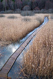 Boardwalk path in wetland Royalty Free Stock Photo