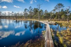 Boardwalk path through wetlands area in early spring. stock photography