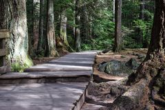 Boardwalk pathway between moss covered trees stock photos