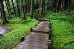 Boardwalk through peaceful mossy forest at Alishan National Scenic Area in Chiayi District, Taiwan Stock Photography