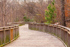 Boardwalk in Piedmont Park, Atlanta, USA. The Boardwalk and thicket of bare trees in the Piedmont Park in autumn day, Atlanta, USA Stock Photography