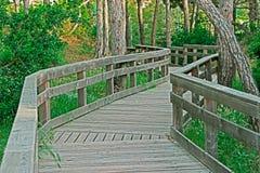 Boardwalk in the pinewood Stock Photo