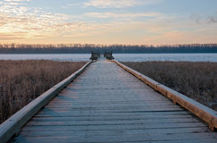 Boardwalk and Platform in Wildlife Refuge Stock Photo