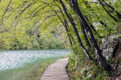Boardwalk in Plitvice Royalty Free Stock Image