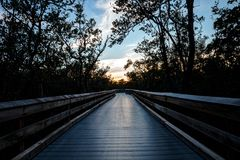 Boardwalk przez bagna, prowadzi milczek przepustka przy zmierzchem mnie Fotografia Stock