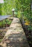 Boardwalk przez mangrowe Fotografia Stock