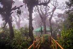 Boardwalk przez mglistego Mechatego lasu w Cameron średniogórzach Zdjęcia Stock