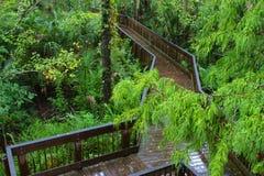 Boardwalk in the rain Stock Photo