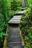 Boardwalk in rain forest stock image