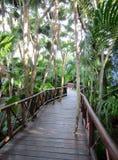 Boardwalk through the rain forest at Playa del Carmen. Riviera Maya, Mexico stock image