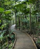 Boardwalk in rainforest. Wooden boardwalk through forest in  Daintree Rainforest, Australia
