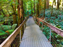 Boardwalk at the Rainforest Gallery Royalty Free Stock Photos