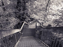 Boardwalk at the Rainforest Gallery Royalty Free Stock Images