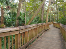 Boardwalk Through the Real Florida Royalty Free Stock Photography