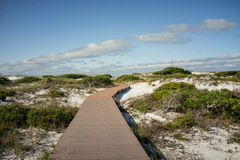 Boardwalk in Sand Dunes at Florida Beach Stock Photos