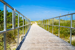 Boardwalk among sea oats to beach in Florida Royalty Free Stock Photography