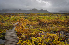 Boardwalk in Skaftafell National Park. A boardwalk in Skaftafell National Park in Iceland in autumn Stock Photos