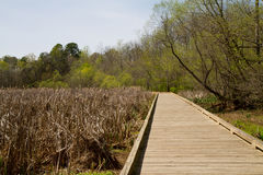 Boardwalk spanning a wetland in Spring Stock Photo