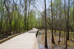 Boardwalk spanning a wetland in Spring Stock Images