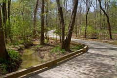 Boardwalk spanning a wetland in Spring Stock Photography
