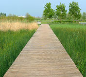 Boardwalk on the swamp Royalty Free Stock Image