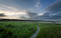 Boardwalk through swamp Stock Photography