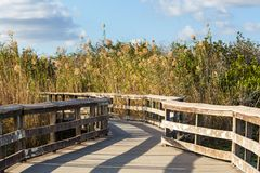 Boardwalk in swamp Royalty Free Stock Photo