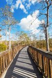 Boardwalk in swamp Stock Image