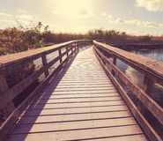 Boardwalk in swamp Stock Images