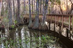 Boardwalk in swamp Stock Photography