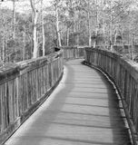 Boardwalk in swamp Stock Photo