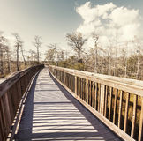 Boardwalk in swamp Stock Photography