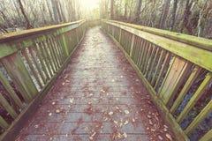 Boardwalk in swamp Royalty Free Stock Photo
