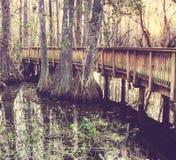 Boardwalk in swamp Stock Images