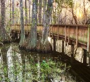 Boardwalk in swamp Royalty Free Stock Image